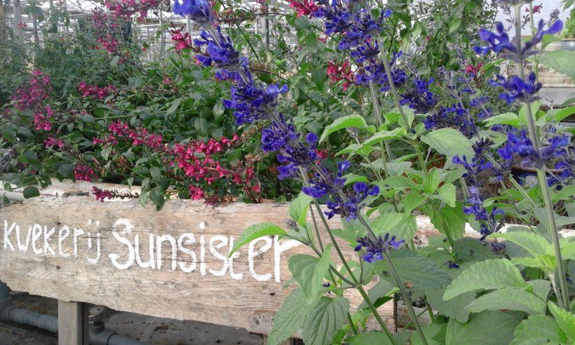 Voorbeeld planten, in grote pot, te koop! Zaterdag 14 september.