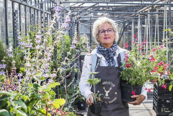 Sunsister in het Algemeen Dagblad 'Salvia's in koude retrokas'