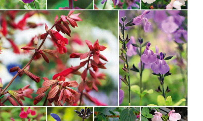 Sunsister in Groei & Bloei 'Ik kweek planten op gevoel'