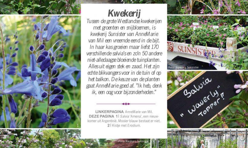 Leuke tekst op site tuinadvies over Salvia's