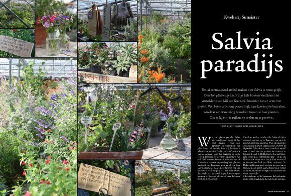 Sunsister in de Tuin (in vier seizoenen) 'Salvia paradijs'